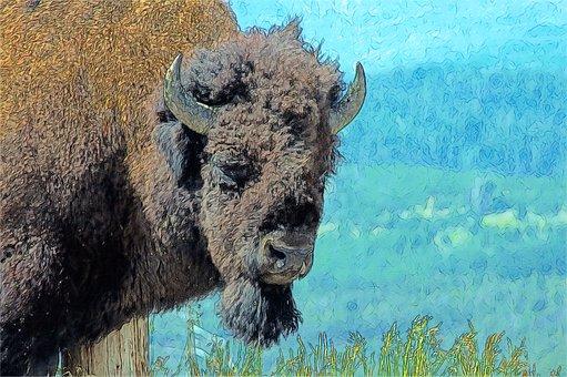 Bull Bison, Bison, Buffalo, Bull, Animal, Mammal