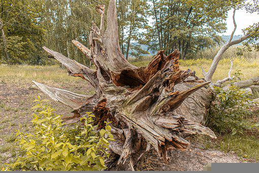 Root, Tree, Tree Root, Forest, Old, Wood, Nature, Flora