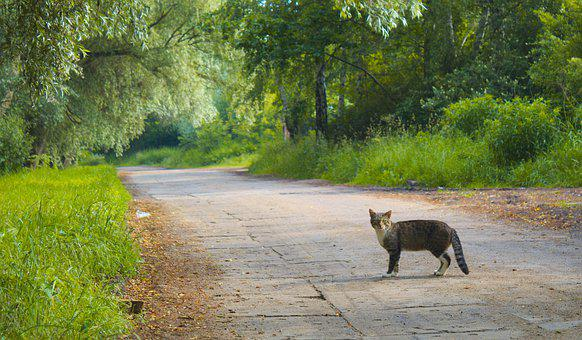 Nature, Animals, Cat, Way, The Path, Alley, Tree