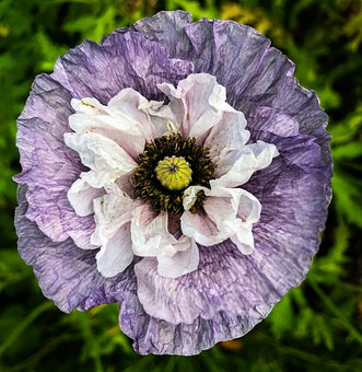 Flower, Garden, Blossom, Summer, Spring, Bloom, Nature
