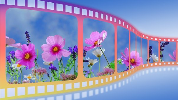 Film, Film Roll, Slide, Filmstrip, Spring, Flowers