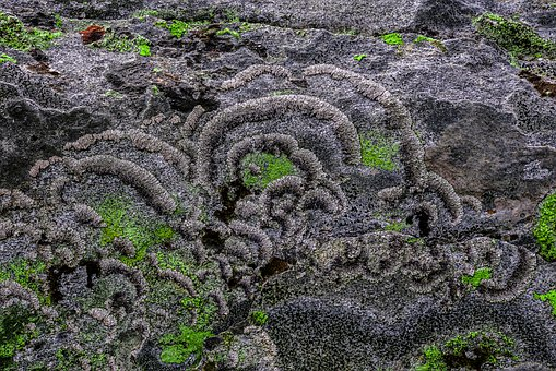 Nature, Moss, Lichen, Forest, Autumn, Mushrooms