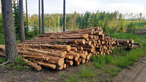 Logs Stack, Log, Wood, Tree Trunks, Trunks, Timber
