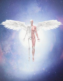 Angel, Skeleton, Body, Moon, Surrealism, Bones, Anatomy