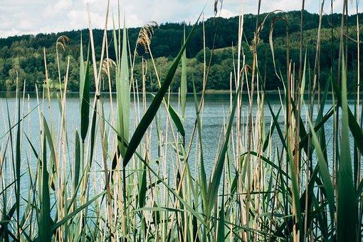 Lake, Blade Of Grass, Sea Grass