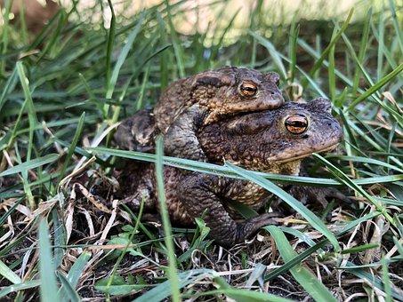 Frog, Back, Brown, Two, Nature, Animal