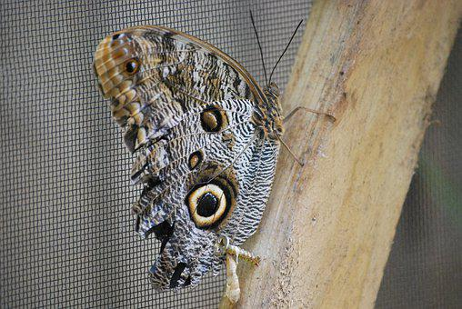 Butterfly, Pupa, Nature, Insect