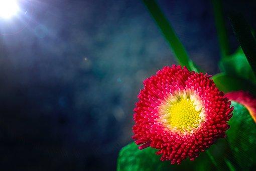 Macro, Flower, Nature, Blossom, Bloom, Plant, Close Up