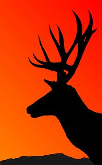 Deer, Animal, Mammal, Wild, Wildlife, Collection