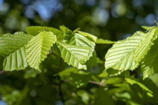 Foliage, Forest, Green, Nature, Tree, Letter, Ecology