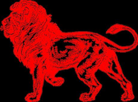 Lion, Red, Male, United, Kingdom
