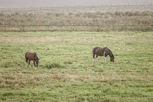 Horses, Meadow, Pasture Land, Rain, Landscape, Mare
