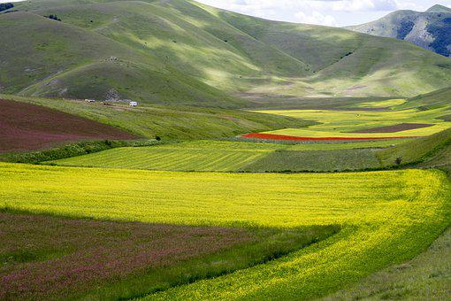 Flowers, Rape, Agriculture, Crops, Bloom, Field, Umbria