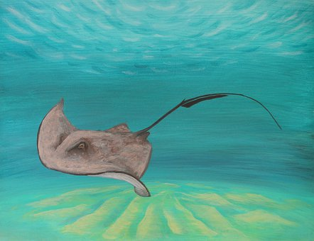 Ocean, Sea, Sting, Ray, Acrylic, Slink