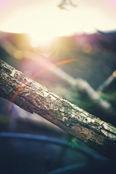 Adventure, Environment, Background, P, Nature, Green