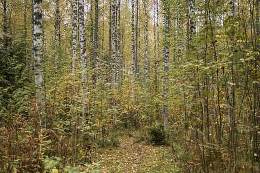 Autumn, Fall Colors, Foliage, Forest