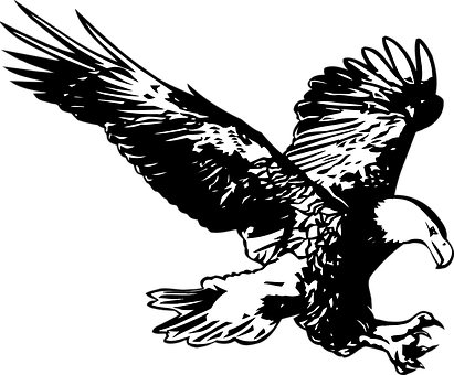 Eagle, Black And White, Birds, Birds Of Prey, Flight