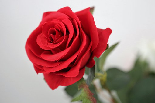 Artificial Red Rose, Flower, Decoration, Red Petals