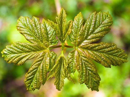 Leaf, Unfold, Young, Spring, Fresh