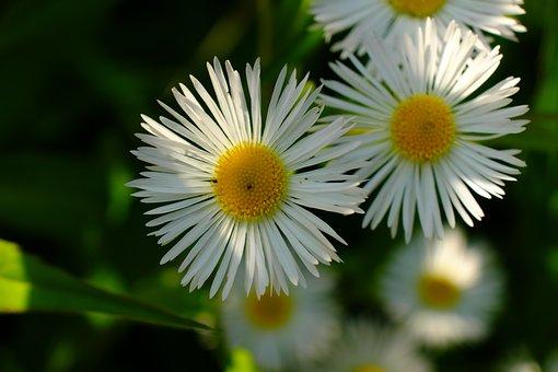Flower, Nature, Spring, Flowers, Meadow