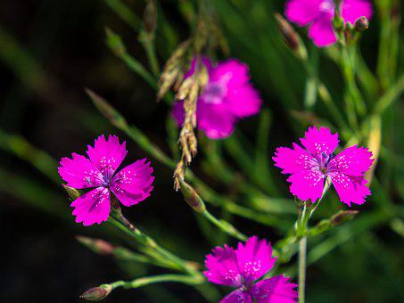 Flower, Retail, Pink, Background, Group, Flora, Meadow