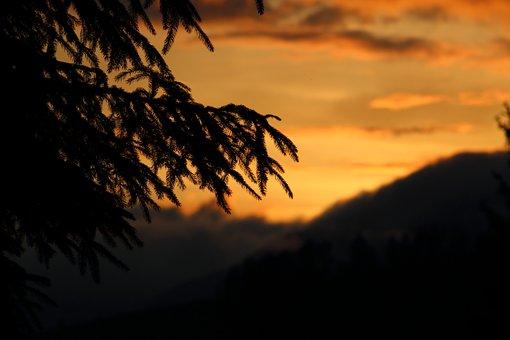 Sunset, Orange, Farby, Sky, Silhouette, Tree