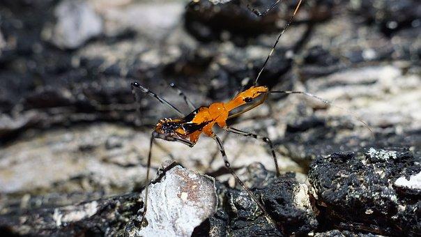 Insect, Spider, Nature, Tarantula, Animal, Hairy