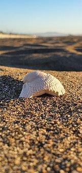 Beach, Shell, Chipped, Sand, Sky