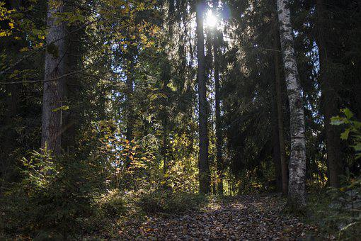Forest, Fall Colors, Nature, Autumn, Day