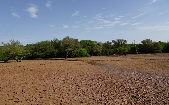 Forest, Greenery, Lakebed, Dry, Sanctuary, Gajner