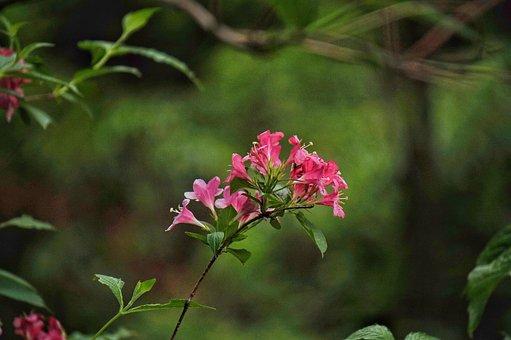 Bottle Flower, Red Flowers, Plants, Nature, Park