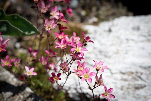 Flowers, Stone Garden, Spring