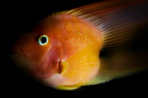 Fish, Nature, Animals, Parrot Fish, Underwater