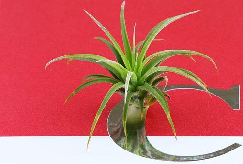 Mini First, Fleshy In This, A Fleshy Plant, Plants