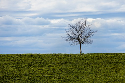 Tree, Horizon, Lonely, Clouds, Sky