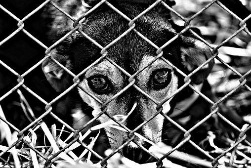 Animal Welfare, Dog, Imprisoned, Animal Shelter, Sad