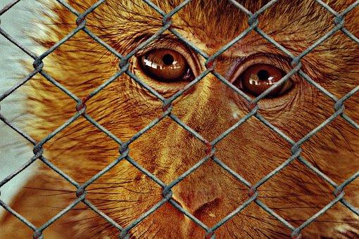 Animal Welfare, Help, Imprisoned, Charity