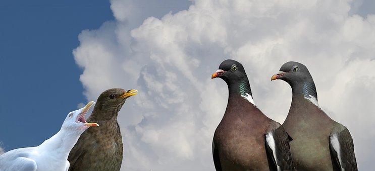 Dove, Blackbird, Seagull, Bird, Image Overlay