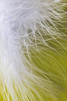 Feather, Ease, Airy, Spring Dress, Bird Feather