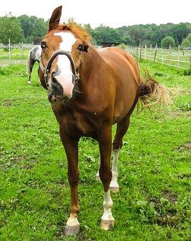 Animal, Horse, Crazy, Halter, Wild, Ride, Equestrian