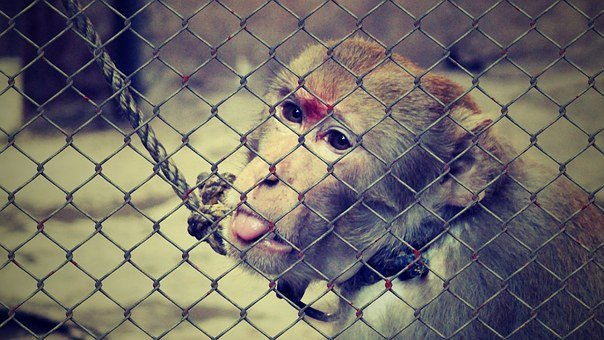 Animal Welfare, Cruelty To Animals, Help, Imprisoned