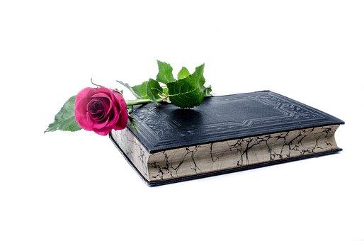Flower, Flowers, Rose, Book, Love, Decoration, Nature