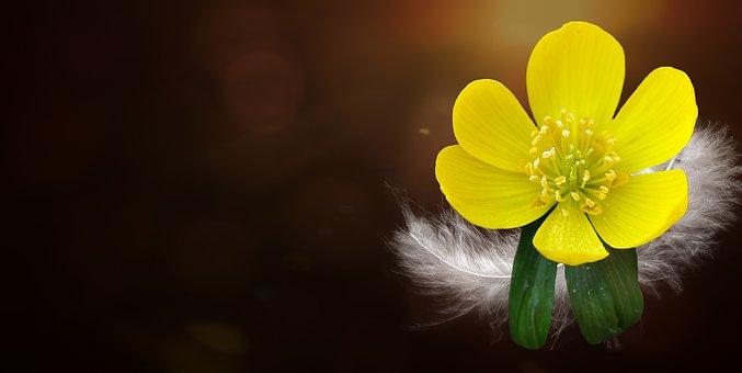 Potentilla, Kobold, Flower, Blossom, Bloom, Plant