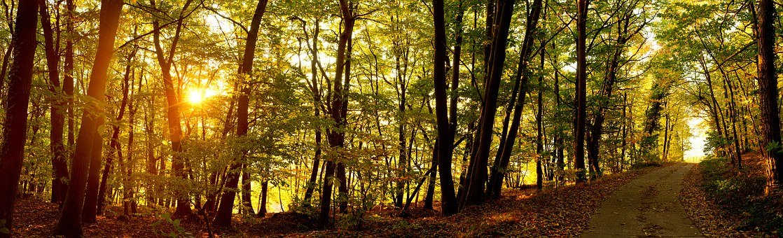 Sunrise, Forest, Forest Path, Autumn, Forests, Nature