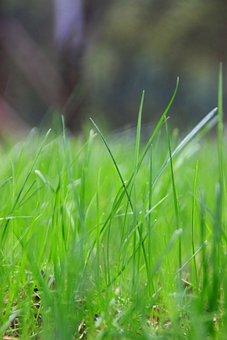 Green Grass, Green, Grassland, Bustling With Life