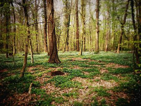 Forest, Trees, Flowers, Grass, Nature, Green, Spring