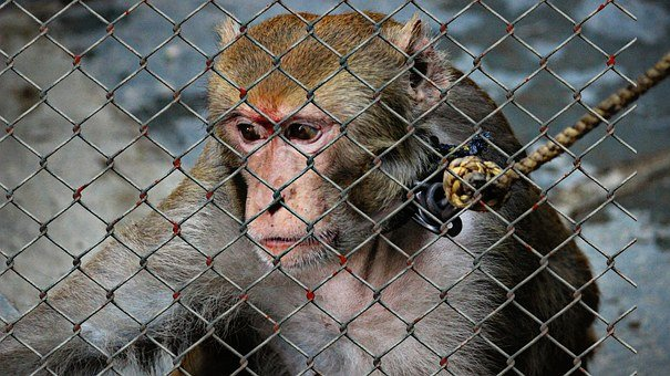 Animal Welfare, Cruelty To Animals, Help, Imprisoned