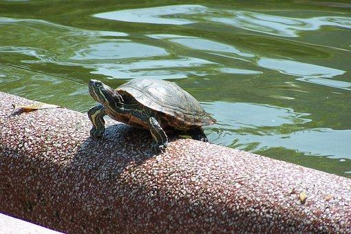 China, Hong Kong, Park, Turtle, Animals, Nature