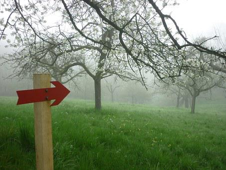In The Morning, Fog, Nature, Direction, Mood