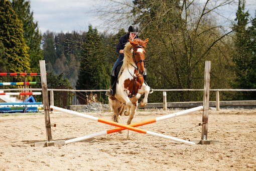 Horse, Jump, Obstacle, Jockey, Showjumping, Sand